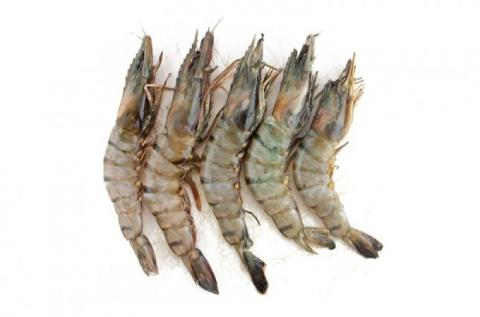 Frozen Shrimp Regular, Black Tiger or Vannamei With or Without Heads With or Without Shells With or Without Intestines A Grade Various Brands