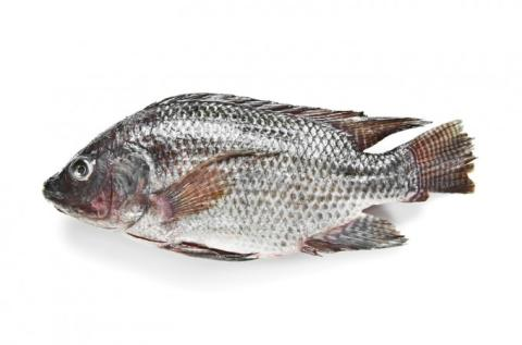 Frozen Tilapia Whole Round, Fillets, Portions, .. A Grade Various Brands