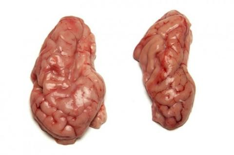 Frozen Pork Brains A Grade Various Brands