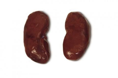 Frozen Pork Kidneys A Grade Various Brands